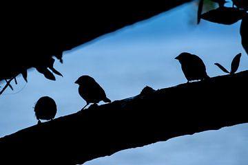 Birds van Five elements media