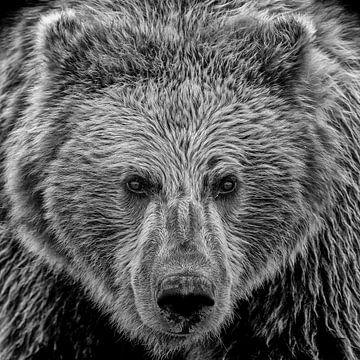 Oog in oog met een Grizzly beer; Zwartwit finish van Michael Kuijl