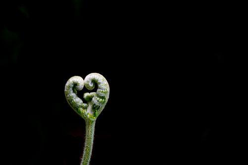 Nature love van