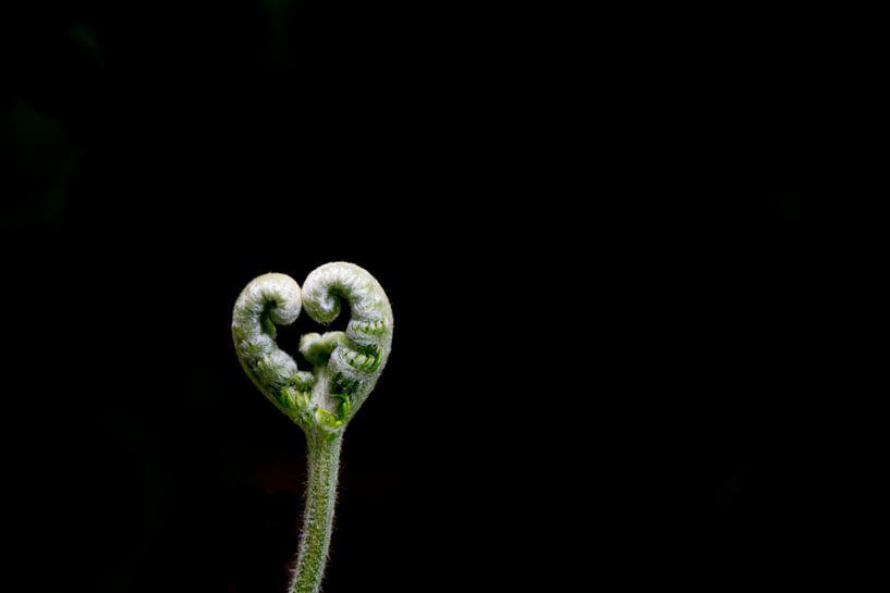 L'amour de la nature sur Adri Vollenhouw