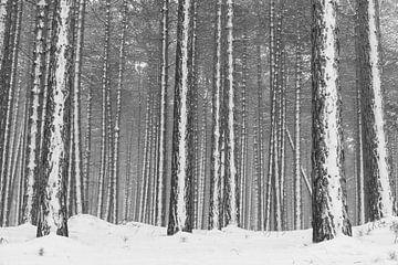 Verschneiter Kiefernwald von Leendert Noordzij Photography