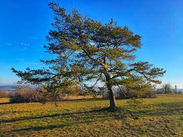 Baum auf dem Staffelberg von Andrea Meister