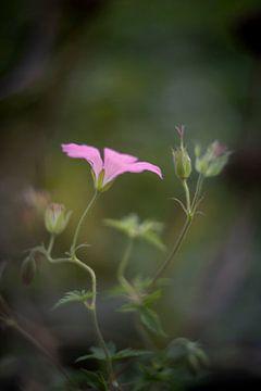 Fleur rose goudron sur Jacqueline de Groot