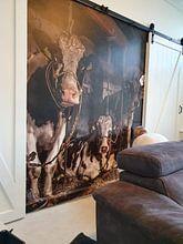 Photo de nos clients: cows in a barn sur Inge Jansen, sur fond d'écran