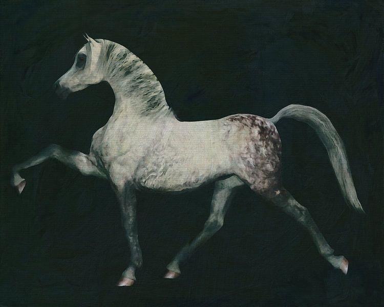 Paard doet een dressuur oefening van Jan Keteleer