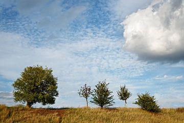 Vijf bomen
