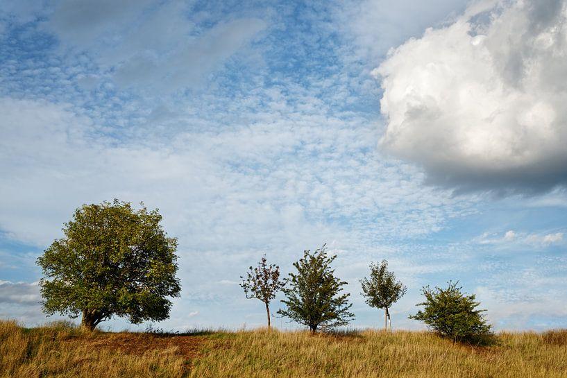 Fünf Bäume von Ralf Lehmann