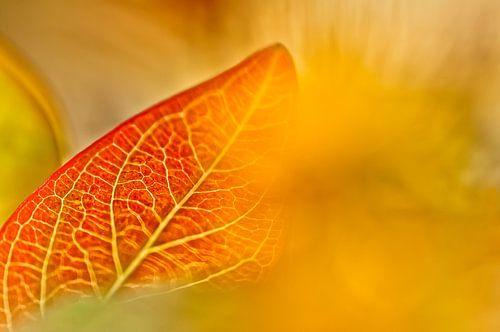 Minimalisme in de natuur