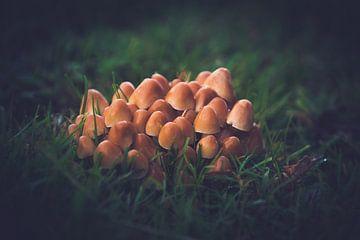 Pilze treffen von