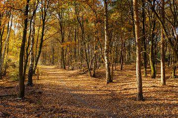 Herbstspaziergang von Johan Vanbockryck