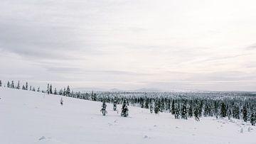 Sneeuwlandschap Fins Lapland || Poolcirkel, Finland