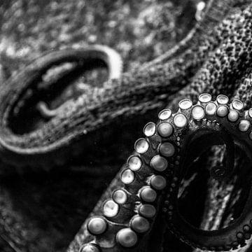 Kunstzinnige octopus van Hans Lunenburg