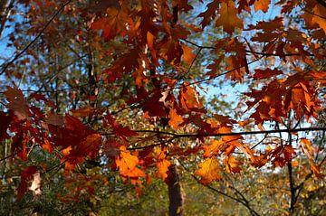 Herfst van Miriam Duda