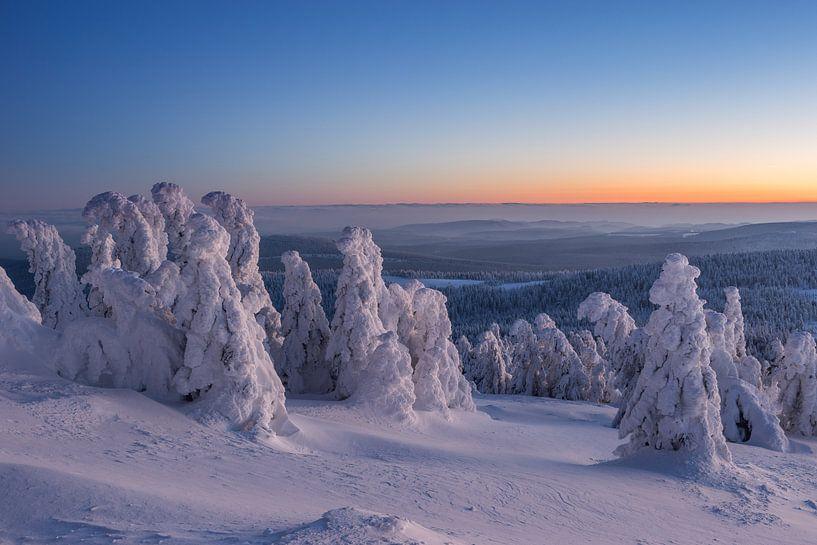Wintertannen von Patrice von Collani