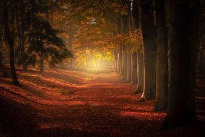 Herfst bomenlaan van Erwin Stevens