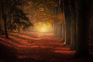 L'avenue d'automne des arbres sur Erwin Stevens