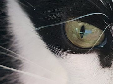 Kattenoog van Joelle van Buren