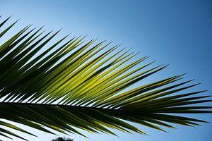 palmblad 2 van Nienke Stegeman
