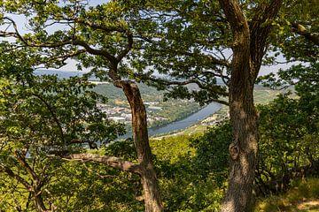 Panoramisch uitzicht op het Moezeldal en de stad Bernkastel-Kues van Reiner Conrad