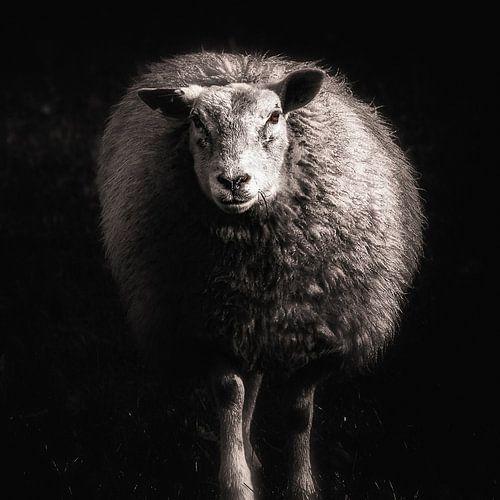 Mouton sur Ines van Megen-Thijssen