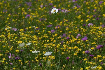 Bloemenveld von Ronald Jansen