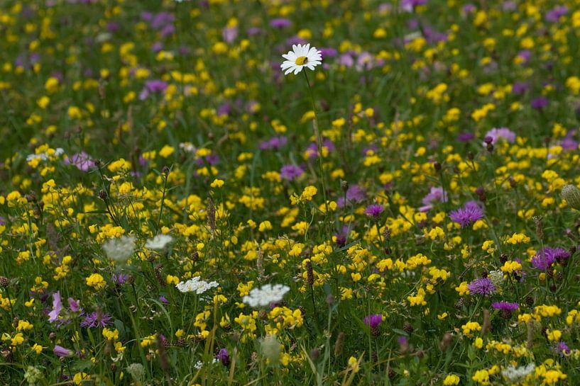 Bloemenveld van Ronald Jansen