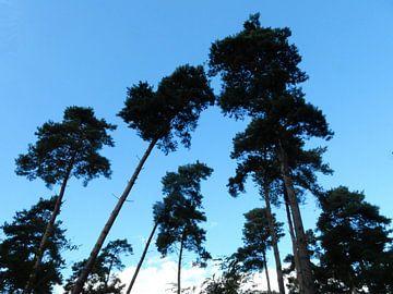 silhouetten  van  bomen  van Joke te Grotenhuis