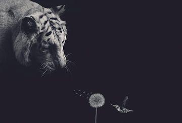 Tiger mit Kolibri auf schwarzem Hintergrund und Vintage-Filter von Hendrik Jonkman