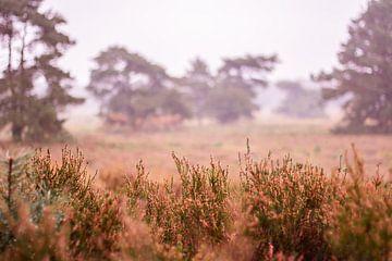 Herfstglorie van de Veluwe - Heide nr. 1