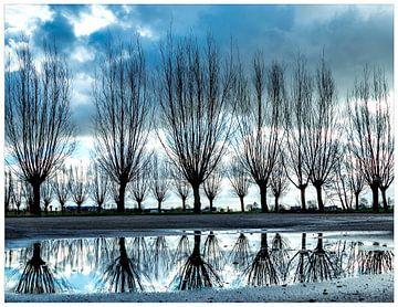 wilgen met reflectie in water. Willows with reflection in water. van Mariska Asmus