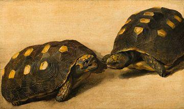 Studie van twee Braziliaanse schildpadden, Albert Eckhout