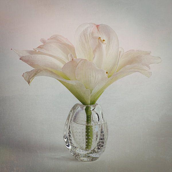 Hibiscus in pastel van Elly van Veen
