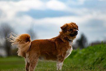 Poserend hondje in landschap van Wesley Hendriks