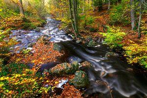 Snel stromend water in herfst bos