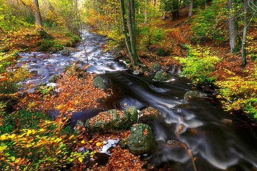Snel stromend water in herfst bos van
