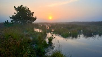 Nebel und Sonnenaufgang auf den Renderklippen von Jenco van Zalk