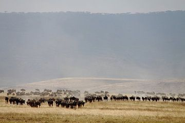 Een kudde wildebeast in de Ngorongoro krater, Tanzania van Marvelli