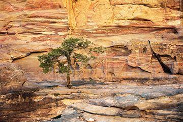 Baum auf den Felsen - Petra, Jordanien von Jan de Vries