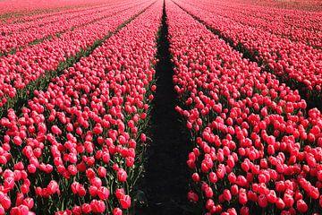Vandaag is rood.... van Bob Bleeker