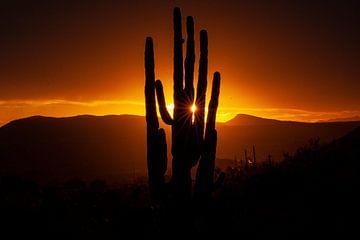 Coucher de soleil dans le Sonora Dessert en Arizona, USA, avec un cactus Saguaro géant. sur Gert Hilbink