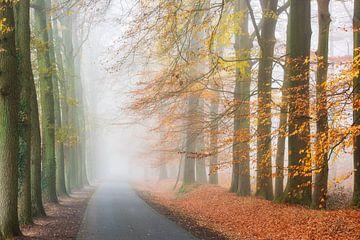 Landstraße im Nebel von Francis Dost