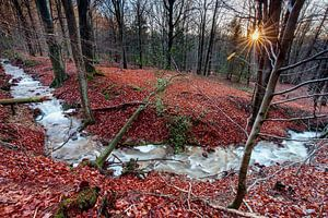 Gebirgsbach in den Ardennen von Rob Boon