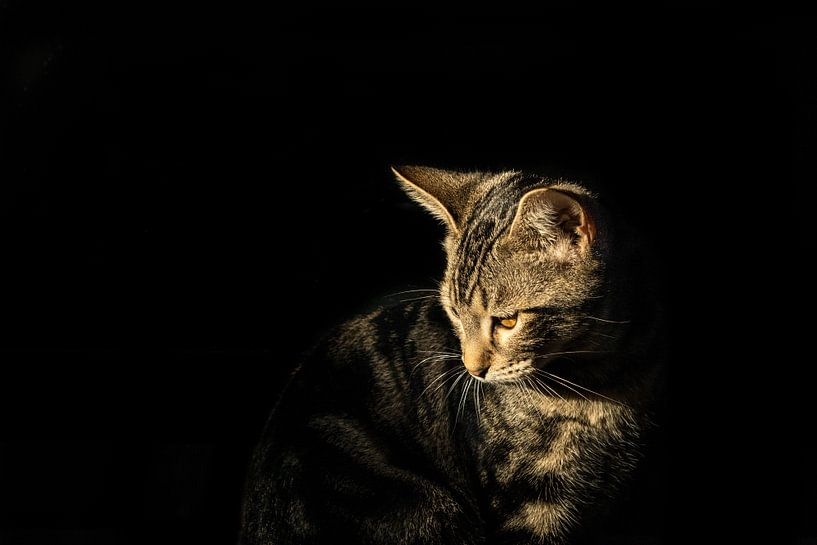 Kat van Marinella Geerts