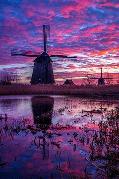 Violette Spiegelung von Peter Heins