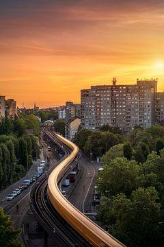 Berlin Schlange von Iman Azizi