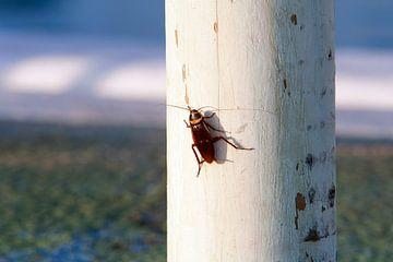 Zonnende kakkerlak op een paal van Peter de Kievith Fotografie