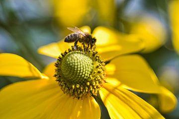 Gelbe Blume mit Biene - Sonnenhut - Rudbeckia von Vinte3Sete