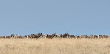 zebra stripes von Aline van Weert