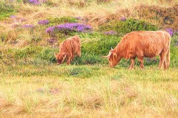 bloeiend duinheide en Schotse Hooglanders van eric van der eijk
