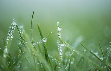 Nat gras 2 van Patrick Verheij